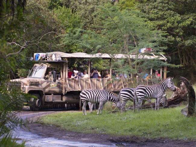 Kilimanjaro Safaris New Zebera Habitat Opens